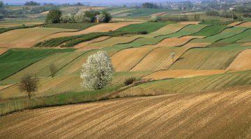 Agricultural Fields on Farm